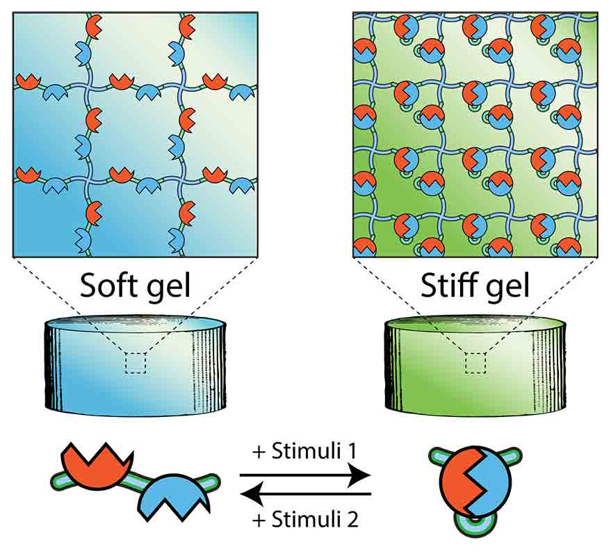 Cyclic Stiffness Modulation of Cell-Laden Protein-Polymer Hydrogels in Response to User-Specified Stimuli including Light