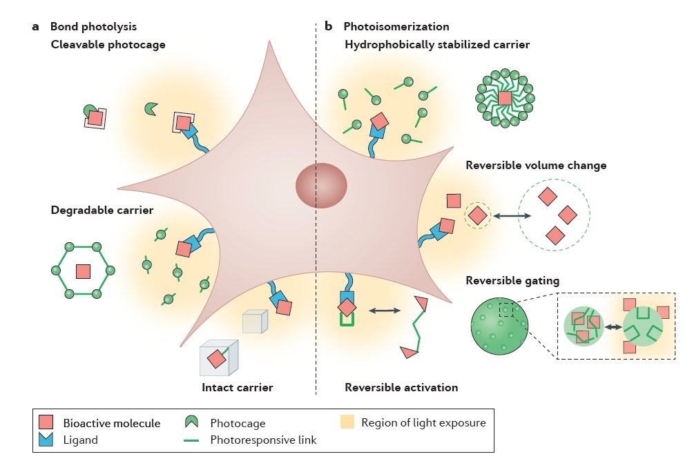 Photoresponsive Biomaterials for Targeted Drug Delivery and 4D Cell Culture